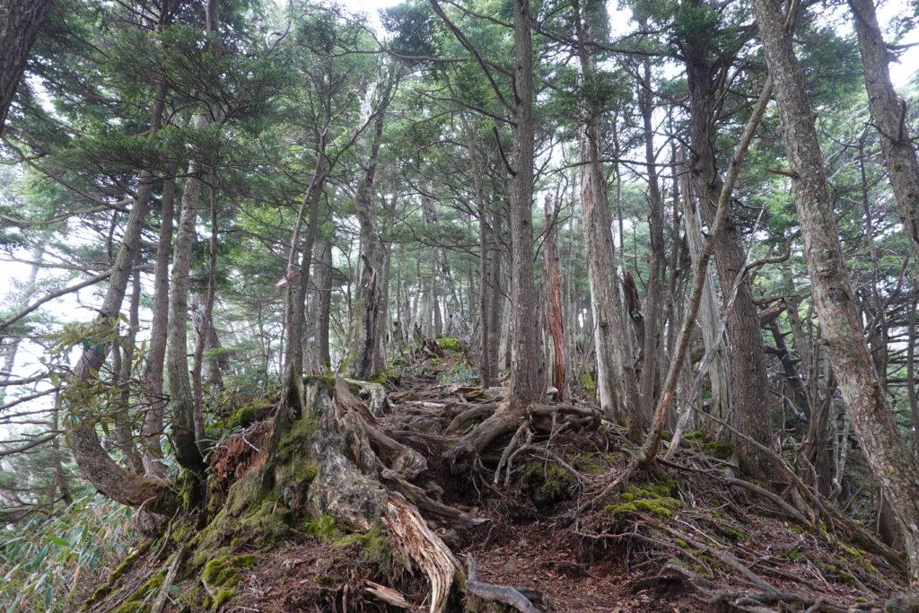 皇海山・不動沢のコルから鋸山へ