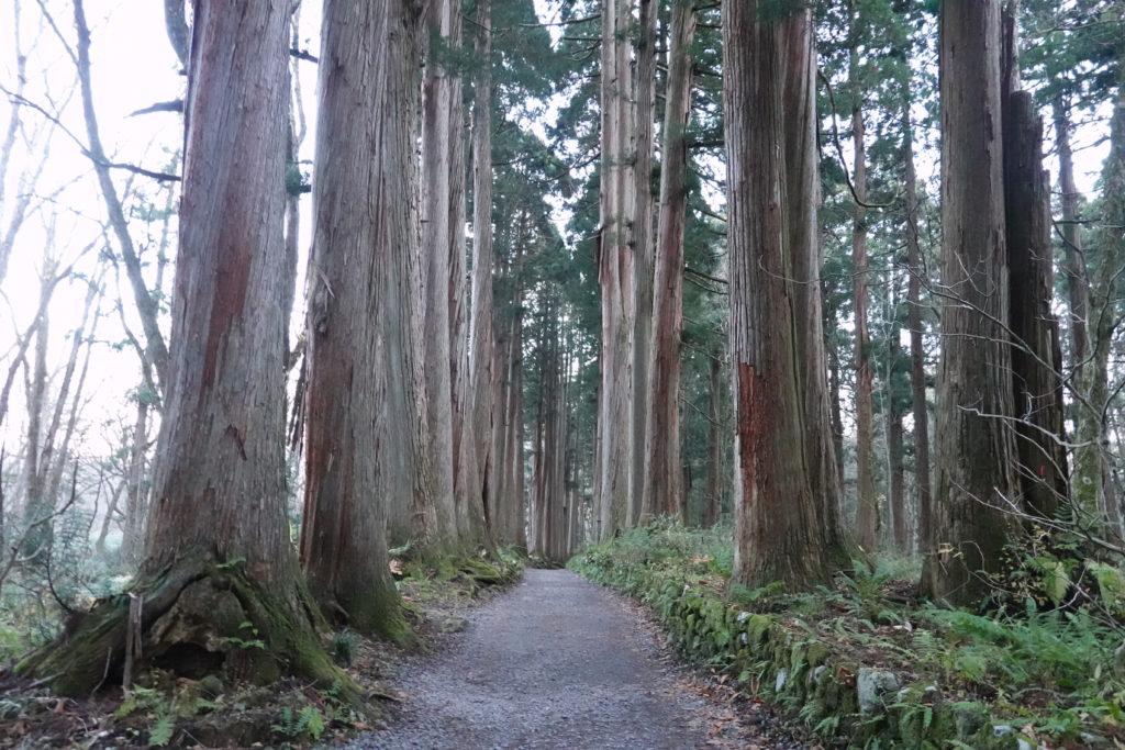 高妻山・戸隠山・戸隠神社のスギ並木