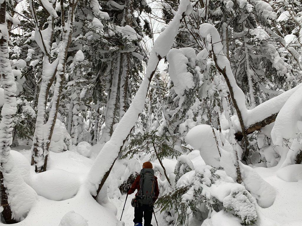 積雪期・日光白根山・深い樹林帯、その2