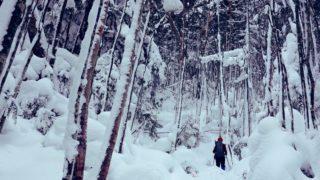 積雪期・日光白根山・深い樹林帯