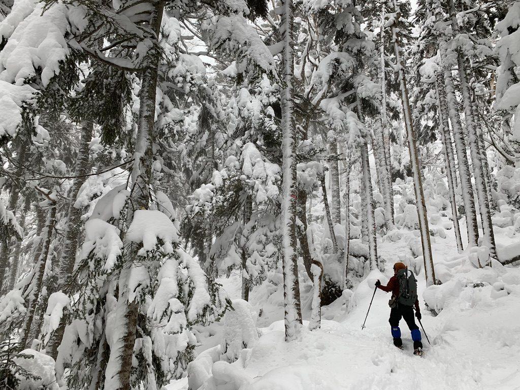 積雪期・日光白根山・深い深い樹林帯