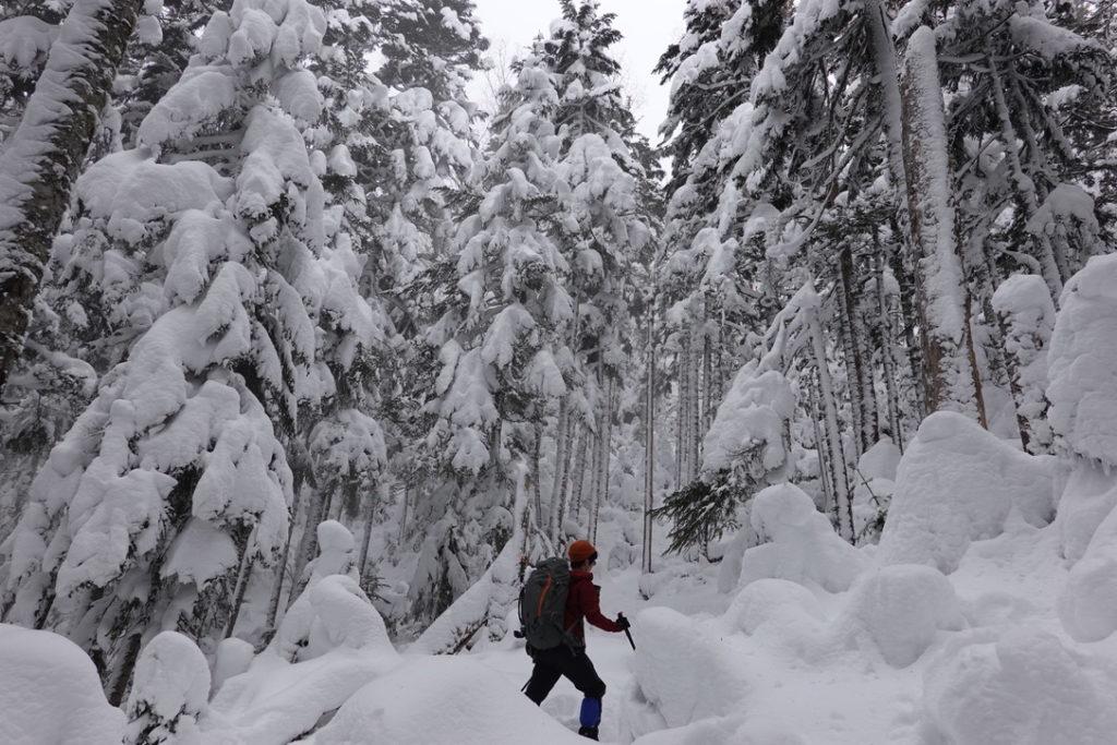 積雪期・日光白根山・深い深い樹林帯、その2