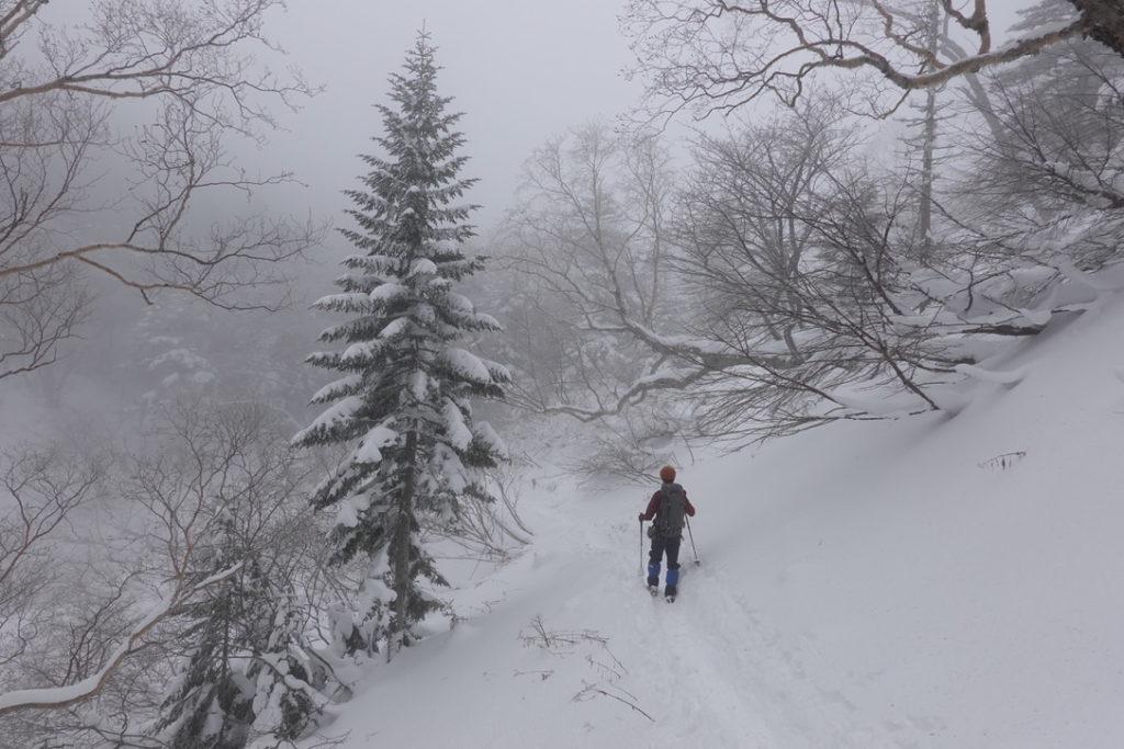 積雪期・日光白根山・深い深い樹林帯・クリスマスツリーの木?