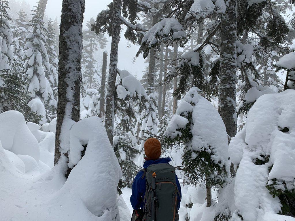 積雪期・日光白根山・深い樹林帯、撤退中
