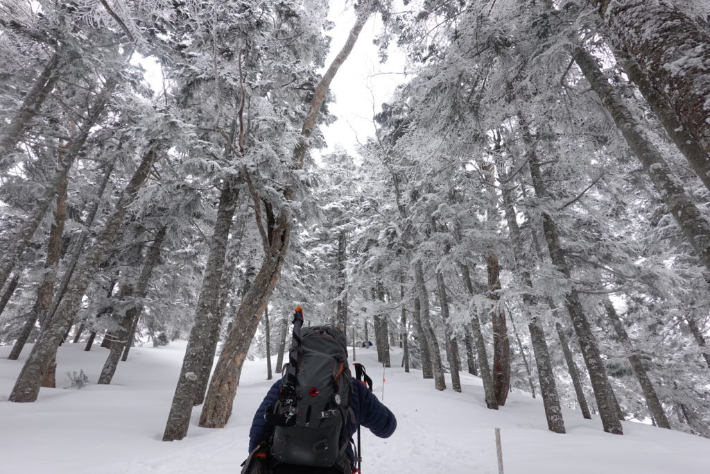 厳冬期・西穂丸山・西穂山荘へ・樹林帯を行く2