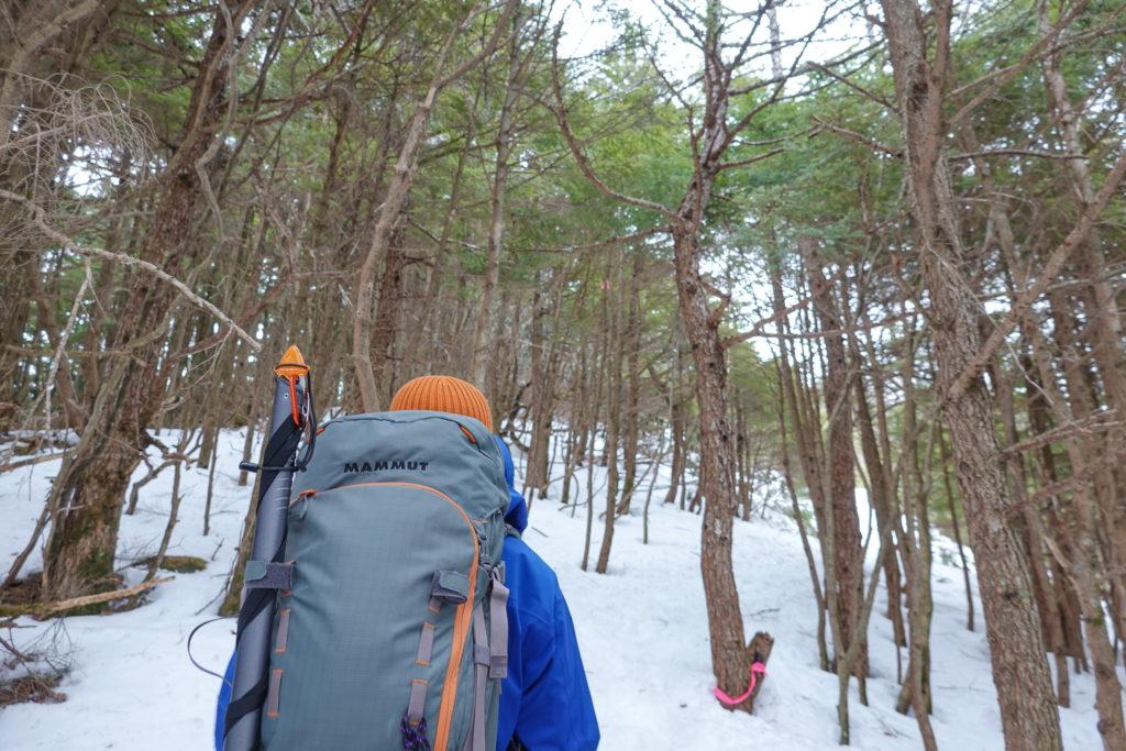 残雪期・浅間山・樹林帯