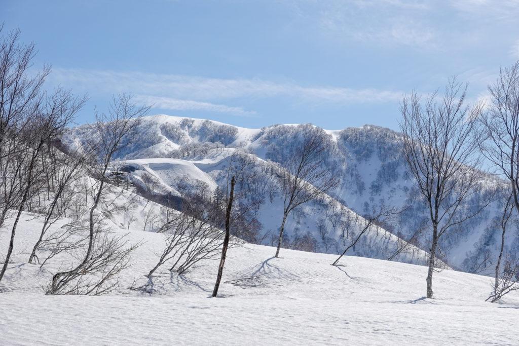残雪期・日向倉山・広い稜線