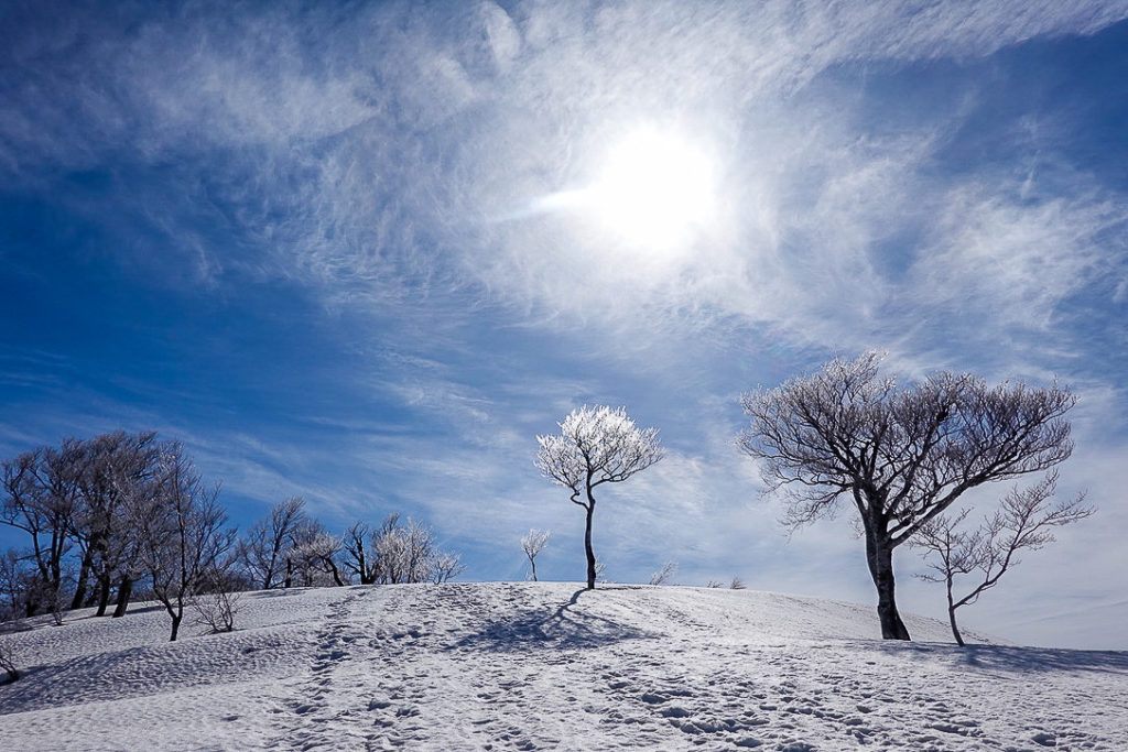 残雪期・日向倉山・日向倉山の樹氷