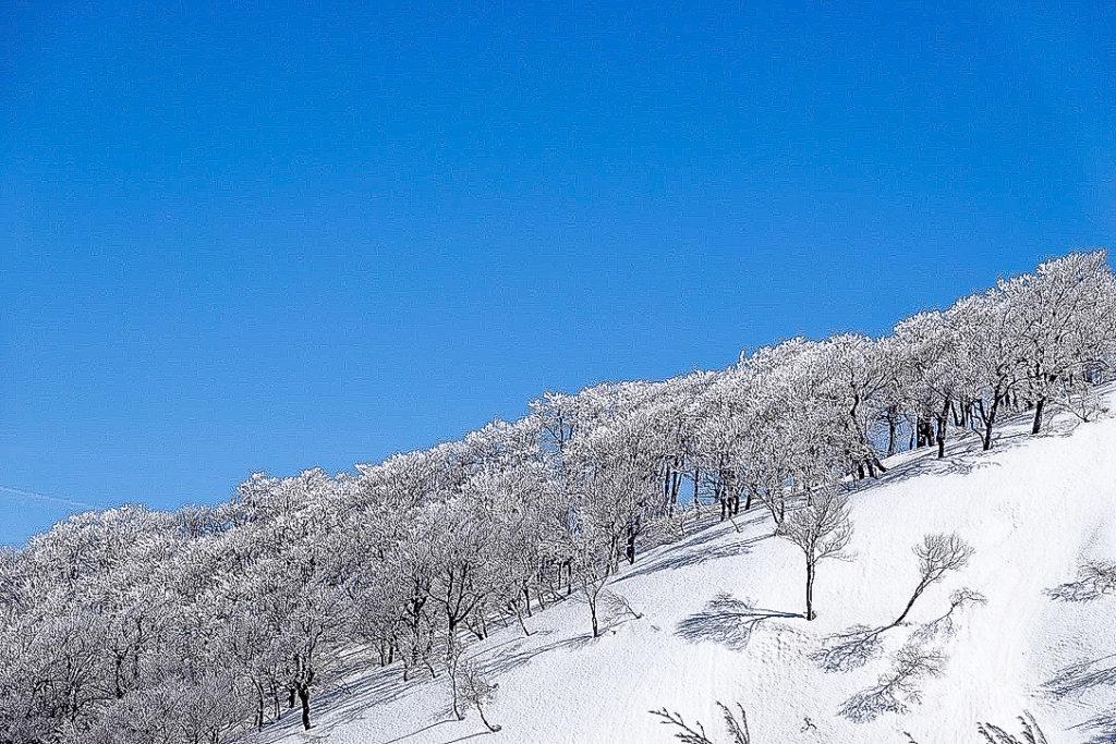 残雪期・日向倉山・未丈ヶ岳の樹氷