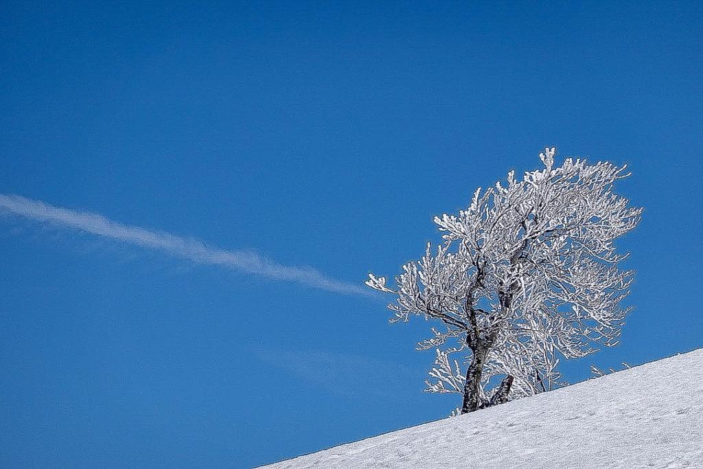 残雪期・日向倉山・樹氷と青い空