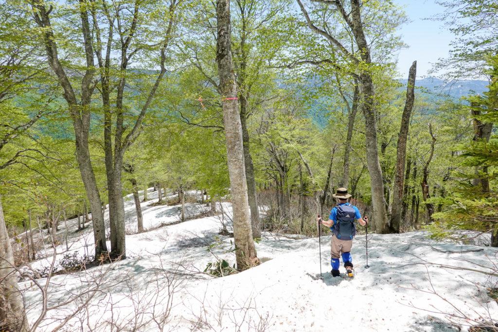 残雪期・会津駒ヶ岳・新緑と雪のコラボ