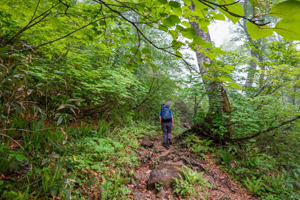 苗場山・沢の道のような湿った登山道