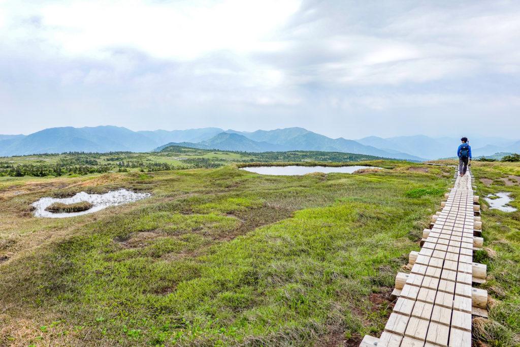 苗場山・山頂の湿原と木道歩き