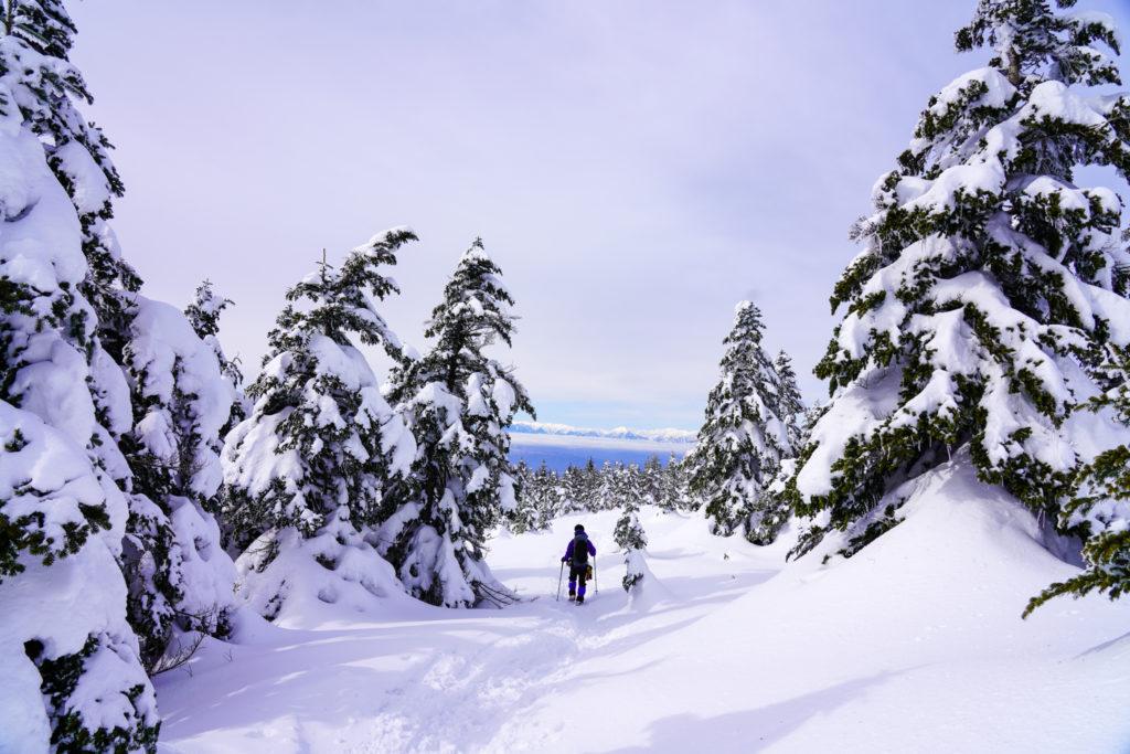 厳冬期・四阿山・背の高い木々