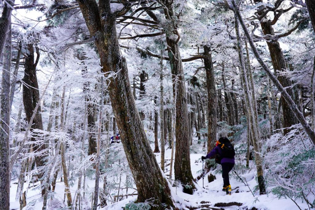 厳冬期・天狗岳・西尾根登山道の樹林帯