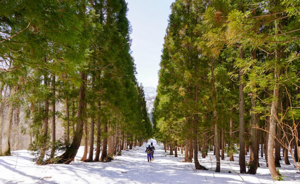 残雪期・東谷山・日白山・ゴール間近の林道