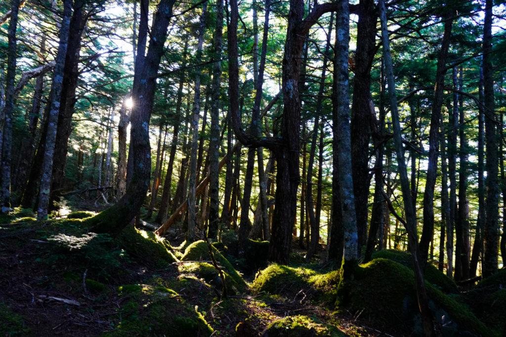 編笠山・権現岳・三ツ頭・日が差し込む樹林帯