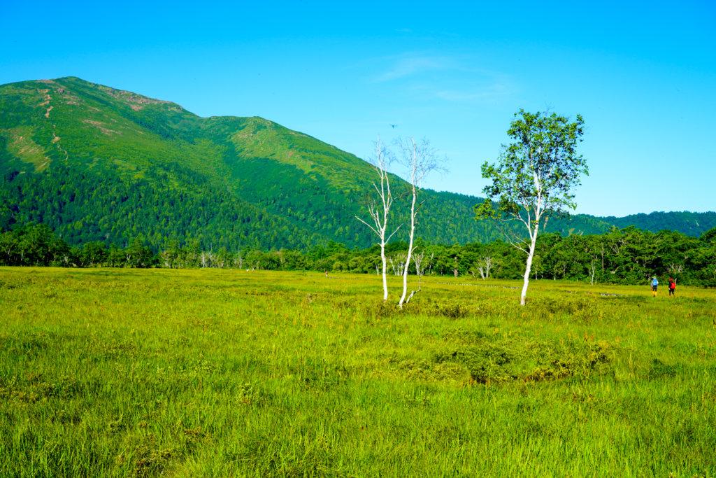 至仏山・尾瀬ヶ原・白樺の木