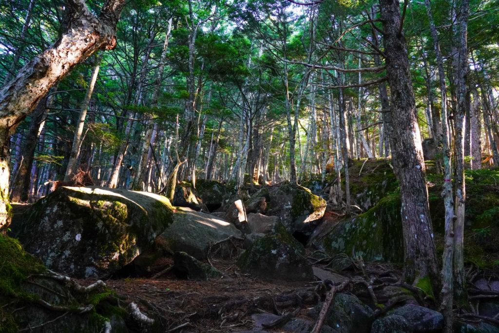 編笠山・権現岳・三ツ頭・苔むす神秘的な原生林