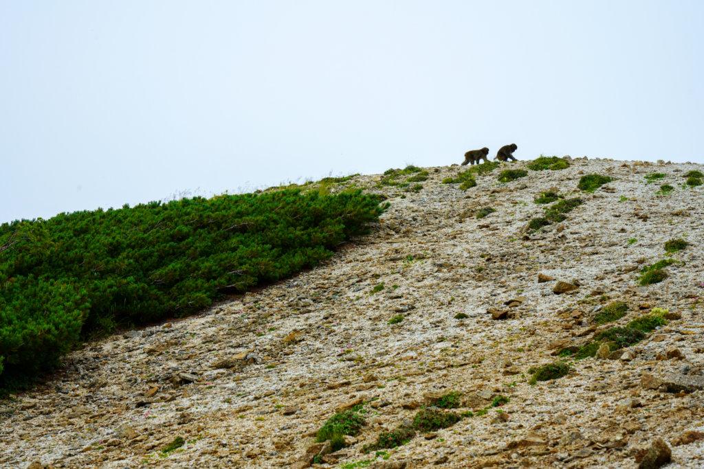 燕岳・燕岳のサル